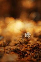 autumnal bokeh by ChromaticBokeh