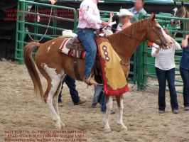 Rodeo-08 by AstriexEquineStock