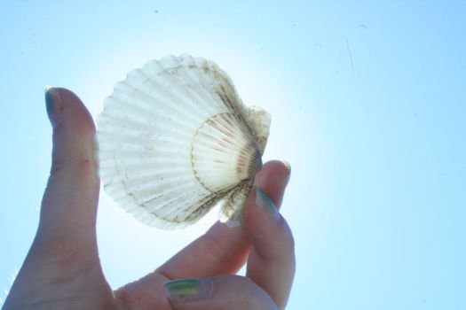 Sunkissed Shell by stixandstonz661
