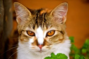 Cat and Mint leaves by HellWars2