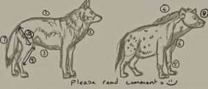 wolf hyena full body compare by Tianithen