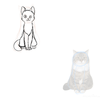 Cat anatomy practise 2 by Growlithe9341