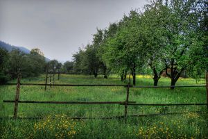orchard by iacobvasile