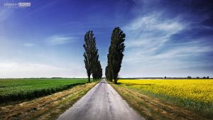 Colza covered road to the Danube by NorbertKocsis