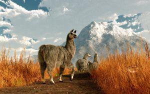 Follow the Llama by deskridge