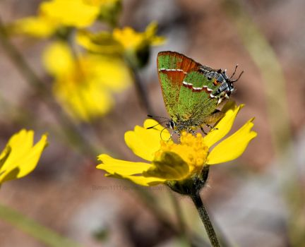 Little Green Butterfly by Bimmi1111