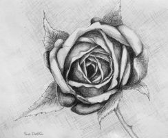 Rose by suedollin