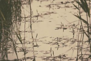 Old pond by 1Mathew7