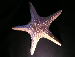 starfish 4 by madamBesson