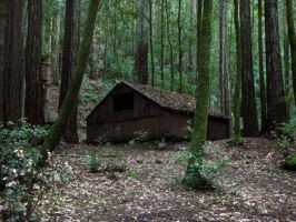 Forest house stock by Raine-Stock1314