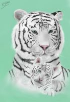 White Bengal Tiger and Cub by Pandoras-Encore