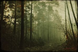 Pine Grove II by rawimage