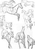 Studies Show Jumping by life-d-sign
