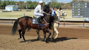 Racehorse Stock 22 by Rejects-Stock