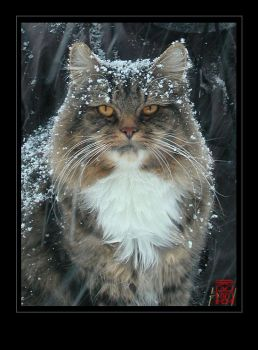 Lioubov - Our mighty snow Cat by somk
