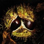 Prickly Gremlin by EarthHart