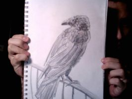 Crow by PulseMap