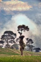 Tree near Irazu Volcano 2 by otas32