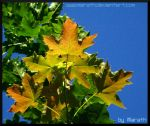 Marpleleaves by Miarath