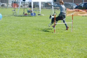 2014 Dog Festival, Agility Contest 33 by Miss-Tbones