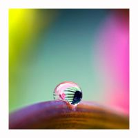 Tiny drop by nicolehinrichs