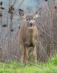 Deer ll by deseonocturno