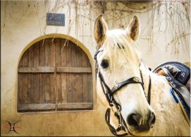 Pegaso 2 by ShannonCPhotography
