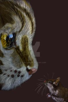Cat and Mouse by Balu90