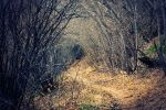 path in the woods by ikari-design