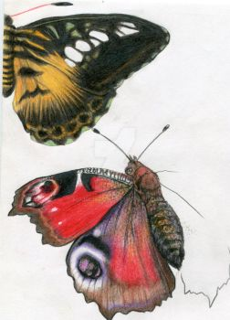 Pencil Butterfly Studies by MojoLiazon
