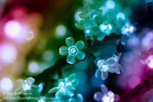 Christmas Flower Lights by twilliamsphotography
