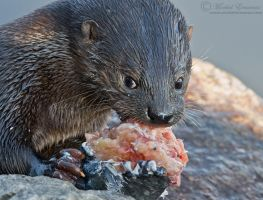 Leave my sushi alone! by MorkelErasmus
