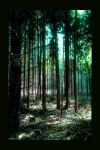 Charmed Forest by photomorgana