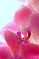 Orchid by Meireis