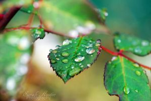 Droplets of Life. by CapnSarah
