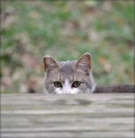Peeping Tom Cat! by suezn