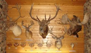Assorted Deer Heads - Antlers by FantasyStock