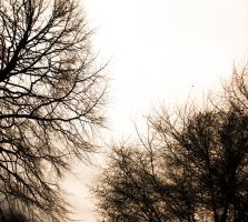 Abstract trees by RobertRobledo