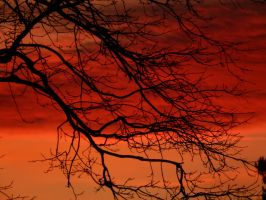 Sunset branches by Finnyanne