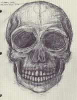 Sketchbook - Skull Study by the-common-cold