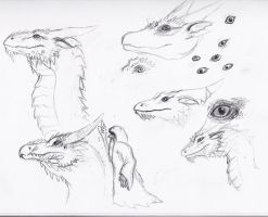 More Dragon Sketches by birdboy5