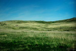Grasslands by ElaineSelene