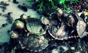 Terrapin Climbing by tugalot