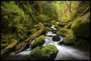 Moss Canyon by MarcAdamus