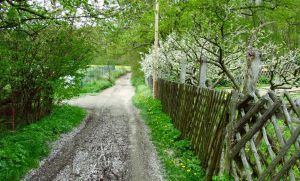 Road in May by aktron