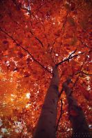 Couleurs d'automne II by Somebody--else