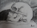 Skull study by smallproblem
