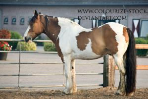 Tobiano 3 by Colourize-Stock