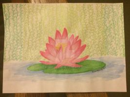 lotus by kerberry14