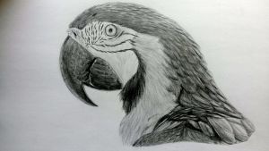 Macaw by LauriieT